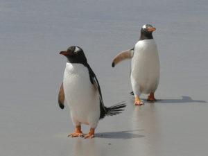 Googleペンギンアップデート