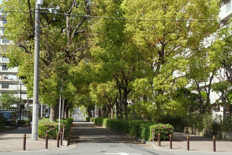 大阪市城東区関目の楠並木
